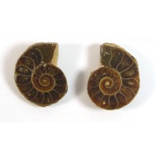 Matched Pair Polished Madagascar Ammonite Fossil Halves 22x20mm