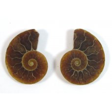 Matched Pair Polished Madagascar Ammonite Fossil Halves 25x22mm