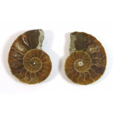 Matched Pair Polished Madagascar Ammonite Fossil Halves 28x24mm