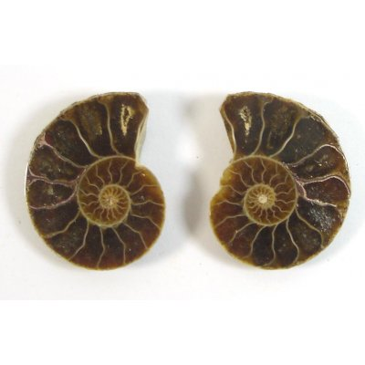 Matched Pair Polished Madagascar Ammonite Fossil Halves 30x26mm