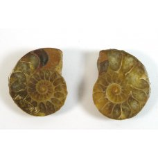 Matched Pair Polished Madagascar Ammonite Fossil Halves 32x28mm